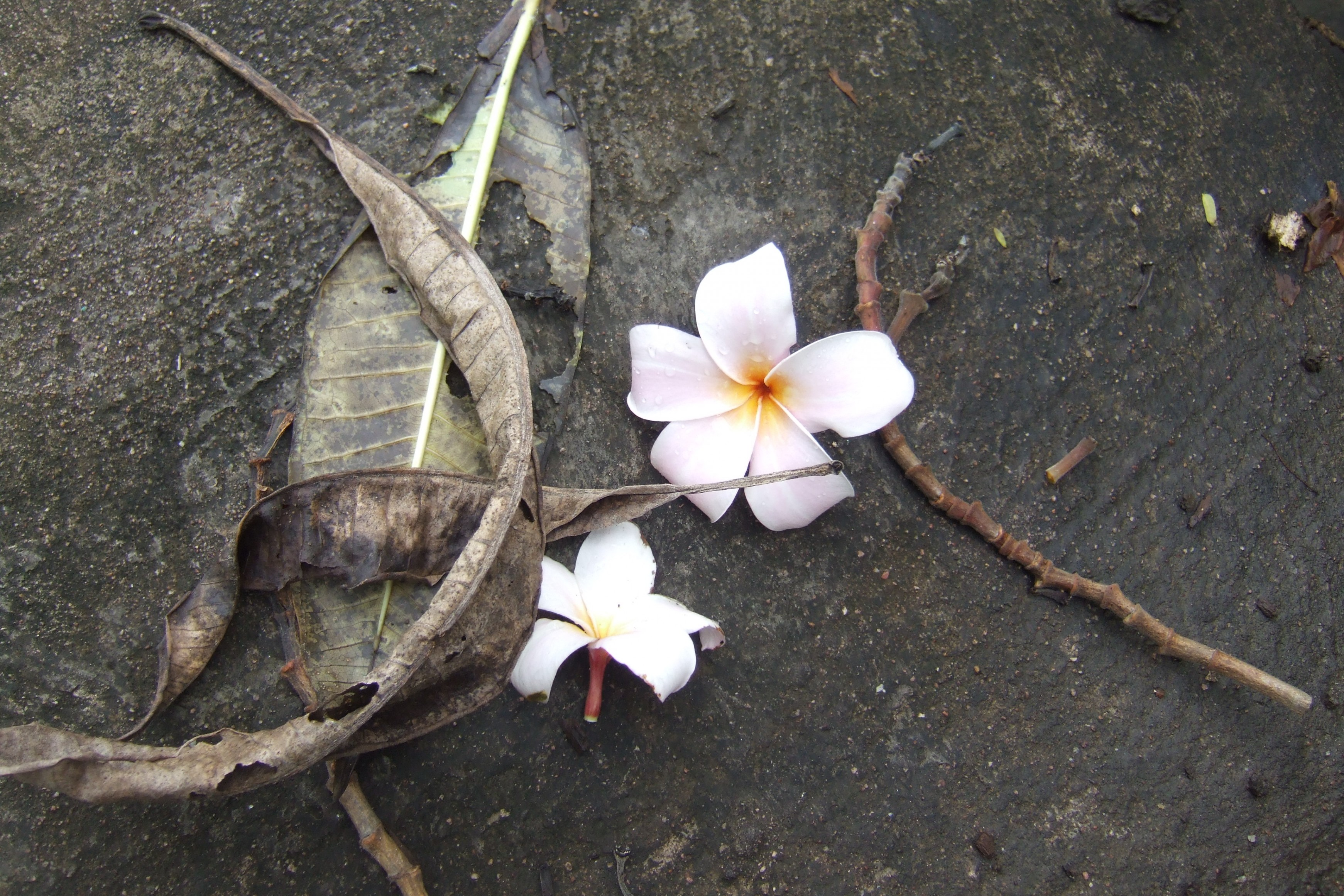 Flowers on the concrete floor