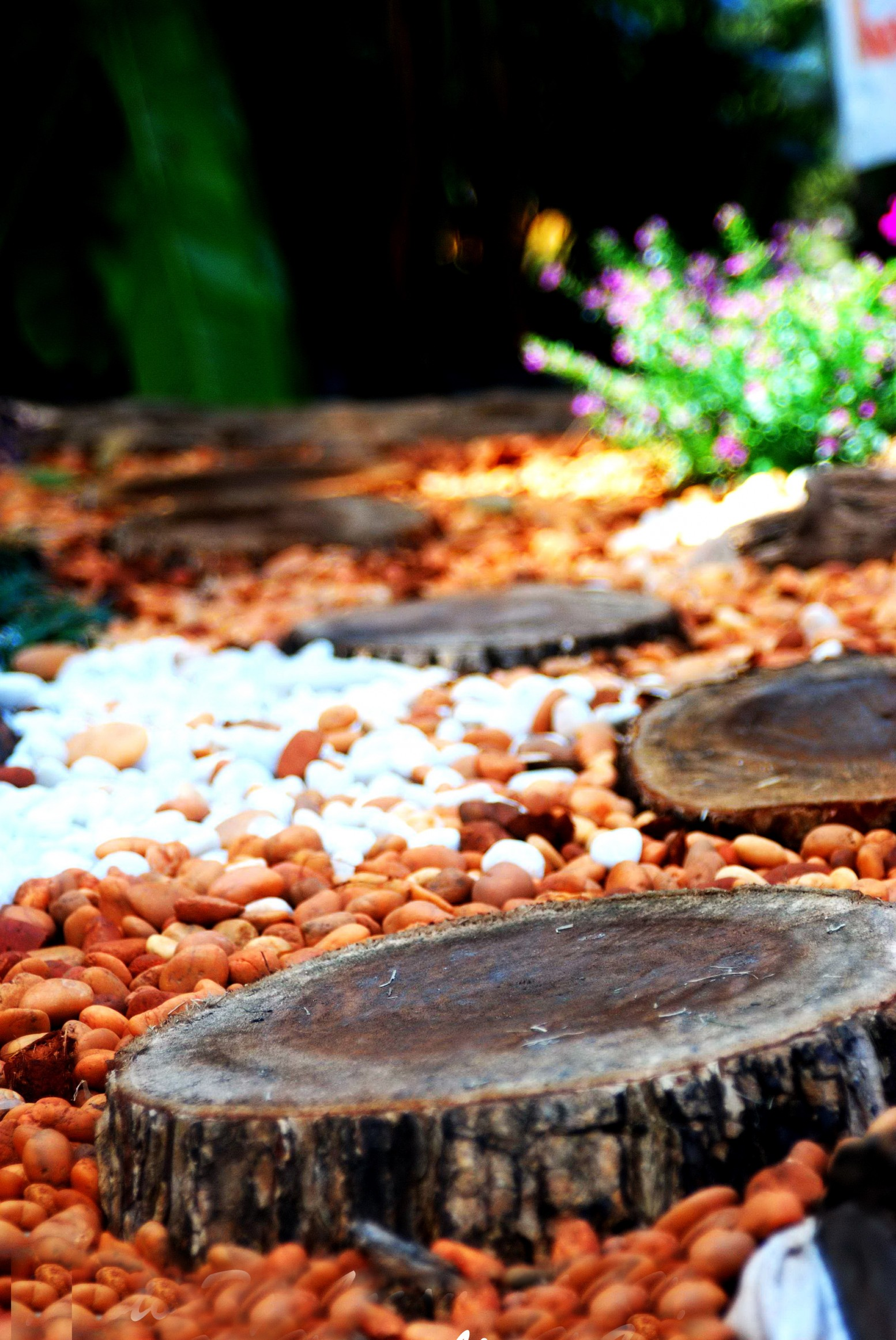 The wooden stumps on pebbles