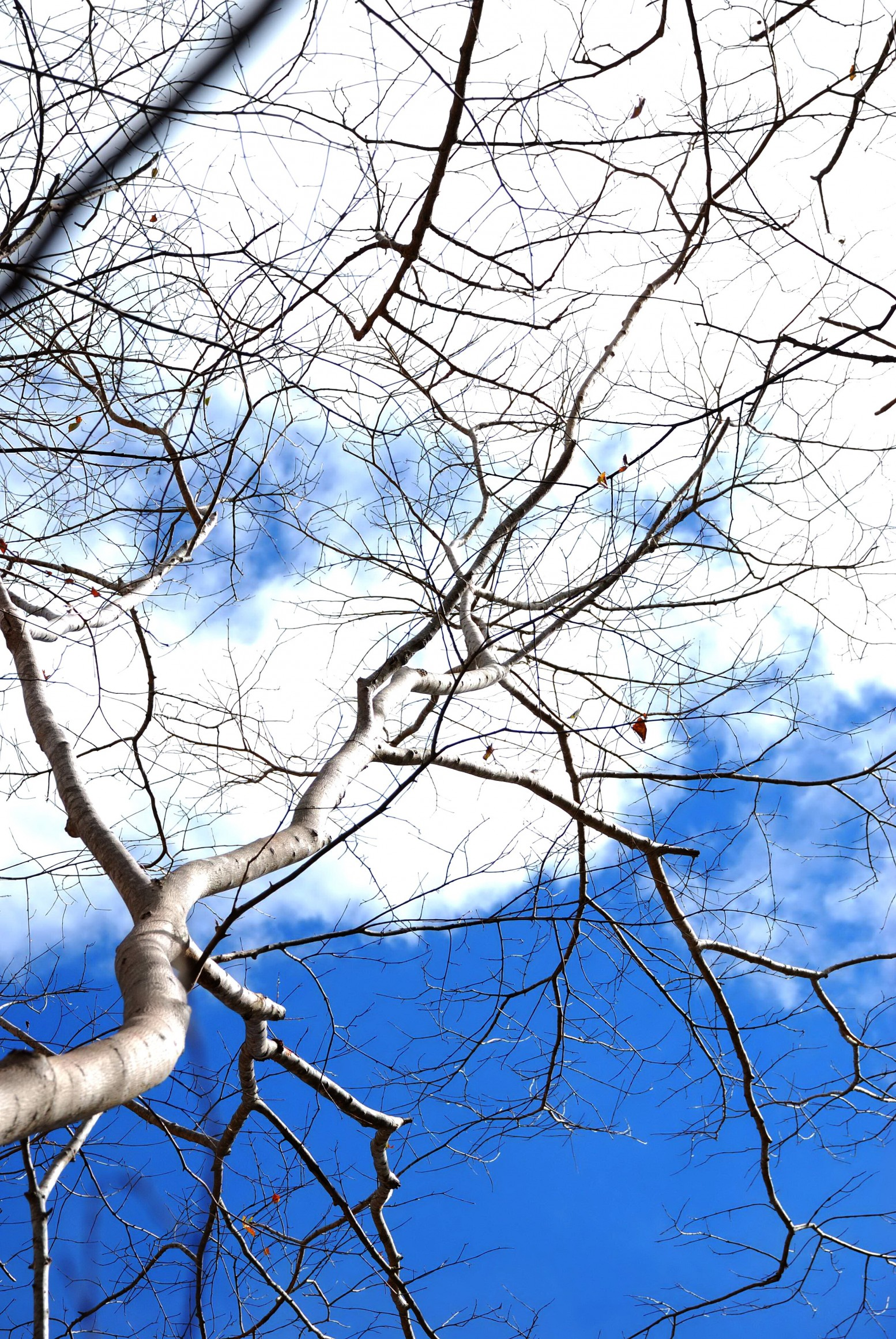 Twigs and the sky